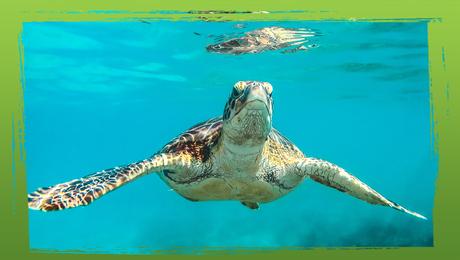 Bedreigde diersoorten: de zeeschildpad