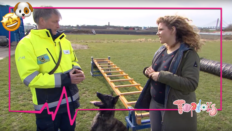 Kan jouw hond reddingshond worden?