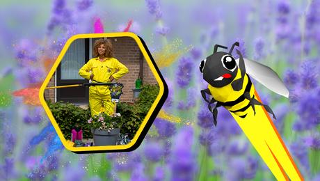 Geschikte bloemen voor bijen