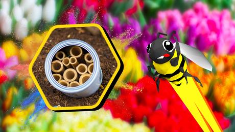 Maak je eigen bijenhotel 🐝🏨