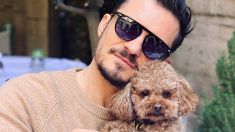 HOND VAN KATY PERRY & ORLANDO BLOOM VERMIST
