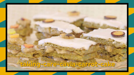 Recept: taking-care-cavia-carrot-cake
