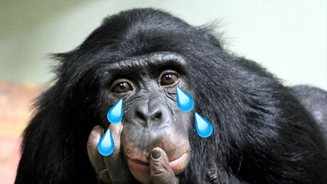 Deze dierentuindieren missen jou