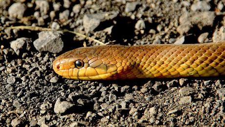 Top 5 Leukste Slangenweetjes