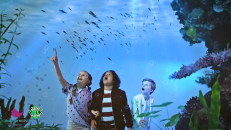 Help de walvis - bladmuziek en songtekst