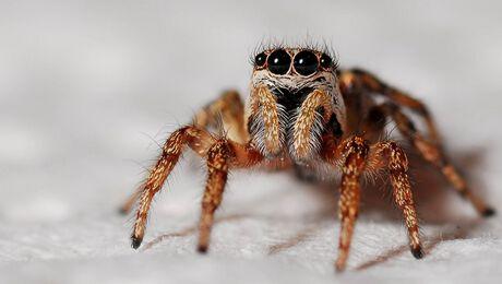 De drie meest gevaarlijke spinnen op de wereld!