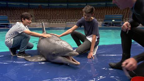 DierenDetectives | Dolfijnen