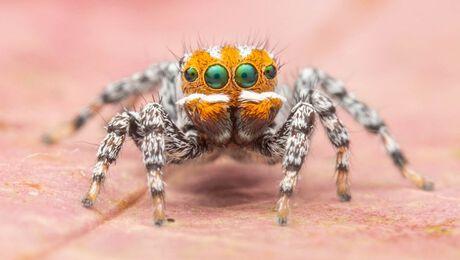 Op welk filmkarakter lijkt dit spinnetje?